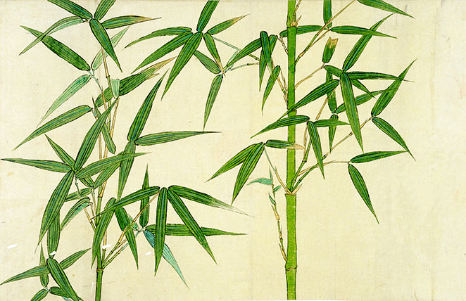 A Study Of The Bamboo Plant Custom Print